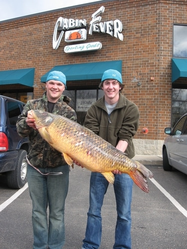 huge fish from customer at Cabin Fever Sporting Goods, Victoria, Minnesota